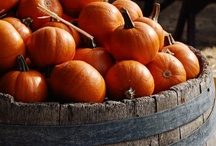 Pumpkins, Pumpkins, Pumpkins... / by Karla Grove