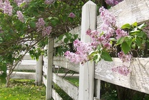 Fences and Gates / by Karla Grove