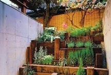 Outdoor Ideas / Ideas for the garden, and a few for indoor planting as well. / by Suzan Stuermer