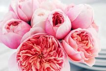 Flowers / Natural beauties