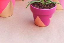Pots & Plants / DIY