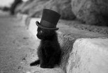 Bein' catty