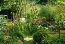Garden Tips & Tricks / garden, gardening, gardening tips, gardening tricks, farming, homesteading, potager