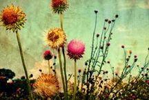 flowers & fruit & foliage