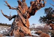 photography: God's awesome trees. / I love the acts of God, known as trees.