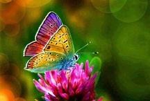 Flutterbys / by Julie Lee