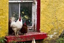 Homesteading / homesteading, on the farm, on the homestead, preparedness, farm life, family farm, self suffcient