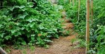 Homesteading Posts from My Favorite Bloggers / A cornucopia of homesteading awesomeness!