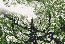 木 / Greenwithenvy, trees, plantproblems
