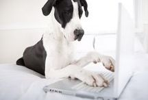 Beyond Indigo Blogs / Get the latest information on digital marketing, websites, and more, as written by our own experienced staff! http://www.beyondindigopets.com/blog/