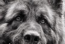 Dog squad / Good dawgs
