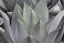 Plant / by Design Survivalist