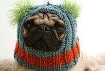 Fuzzy, Furry Creatures :) / by Jessi Ragan
