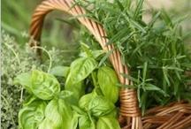 Garden Goodies / Tips and tricks to the best garden grows.