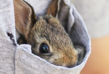 B U N N Y / Bunnies are just so darn cute...