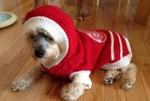 Hockey Pets / Fans come in all shapes, sizes, and species.