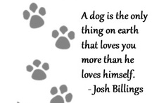 Pet Truths / Our pets our interesting creatures with behavior that makes us think and wonder.