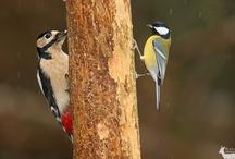 Birds / Birds from allover