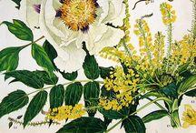 Botanical Fantasticals