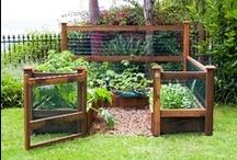 Gardening - Veggies/Fruits / by Michelle Sherrill