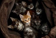 Cats / by Jenny Durham