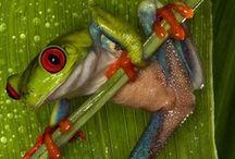 Biological / Animals, flora and fauna