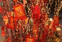 Celebrations: Chinese New Year / by Mindy Sweat