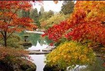 Festivals - 09 September - Autumn Equinox / by Christel B