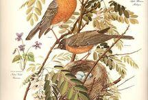 Inspiration: Birds