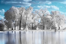 Winter Wonder Land / by Dagmar Sweatt