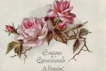 Vintage Illustrations,Postcards and Ephemera / by Stella Lucena