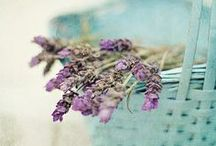 LAVENDER, BLUE, PINK / by C Michele