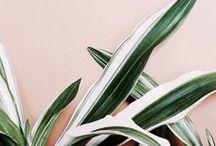 DECO/ PLANTS