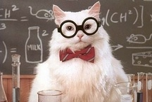 Chemistry Cat / This cat just makes me smile :)  / by Clarice Larkin