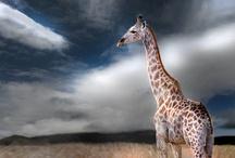 Animal Kingdom / by Lana Belic