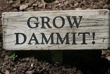 Gardening / by Dagmar Sweatt