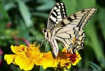 Butterflies / by Lana Belic