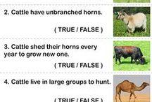 Animals Worksheets