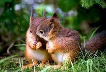Oh Nuts.....