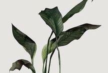 | plants | / plantas · design · decoração · urban florest · suculentas · cactos · plantas de apartamento · botânico · flores