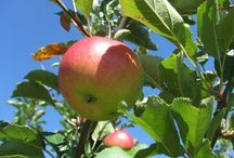 fruit trees / by Deb Hasbrouck