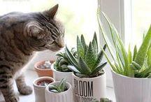 Pflanzen und Katzen / Pflanzen und Katzen – kein Problem! Hier findet Ihr Links zu den Produkten die ich verwende und weitere Ideen, die Euch vielleicht inspirieren können.