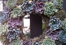 Wreaths / Get creative with living wreaths.