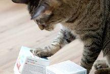 Katzen - Spiele und Beschäftigungsideen / schönes Katzenspielzeug, Katzenspielzeug selber machen, Katzenbeschäftigung, Dinge fürs Katzenwohlbefinden