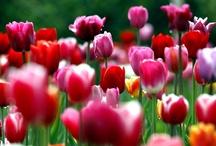 [ spring ] / by jessica dao
