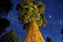 Amazing Nature / by Jae Briggs