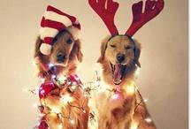 Christmas / by Kelly Meek