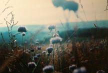 <come naturally> / by Alina Vazquez