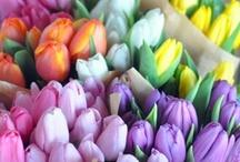 floral fantasy.