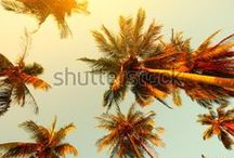 Palm Trees / by Shutterstock